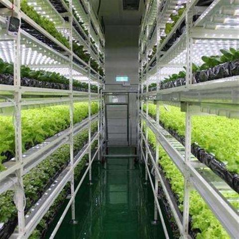 植物培养型人工气候室 科研用植物培养型人工气候室 植物人工气候室厂家