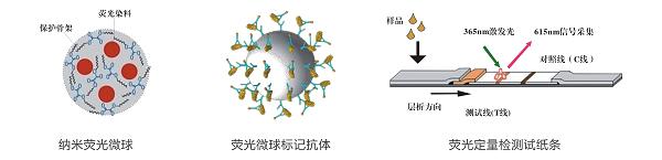 三唑磷荧光定量快速检测卡/试纸条